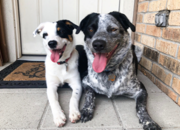 Five Reasons Why Two Dogs Are Better Than One | Meekly Loving by Sydney Meek