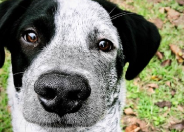 10 Things I Didn't Expect When Getting a Puppy   Meekly Loving by Sydney Meek