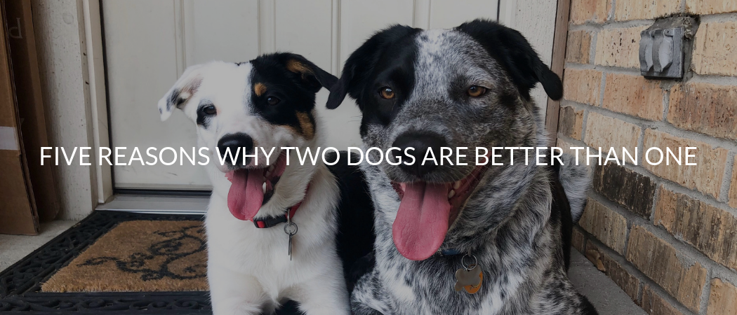 MetaSlider_Five Reasons Why Two Dogs Are Better Than One